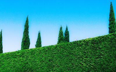 Tronçonneuse électrique : pour mieux entretenir son jardin